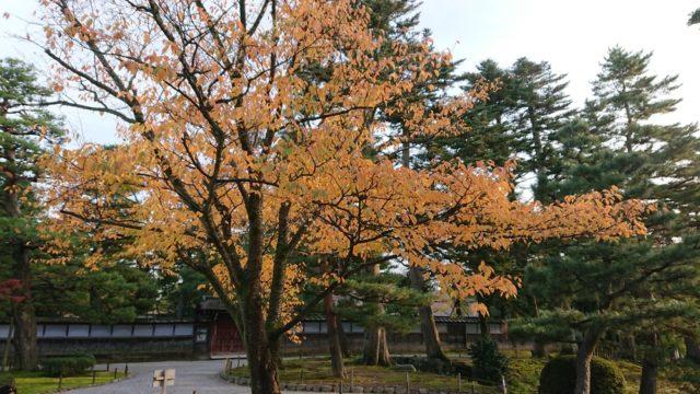 成巽閣の前の紅葉
