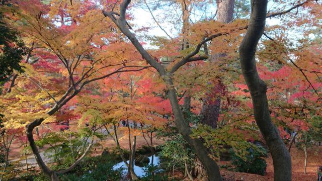 山崎山の頂上からの紅葉