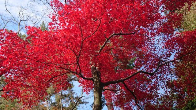 小立野口近くの紅葉